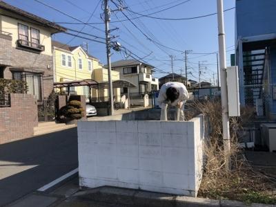 フェンス撤去・看板移設工事3.JPG