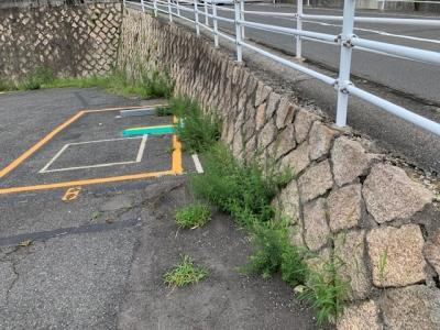 草刈り (2).jpg