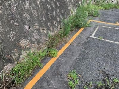 草刈り (3).jpg