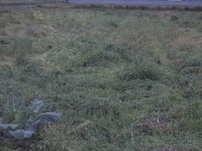草刈後途中