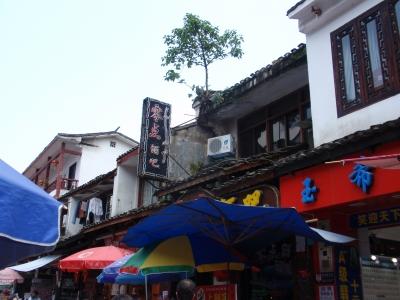 屋根の上で根を張り育った木