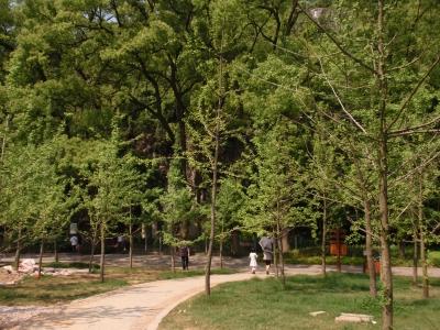 緑あふれる七星公園