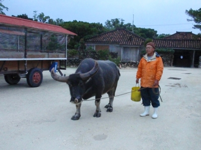 早いね〜、と水牛さん。