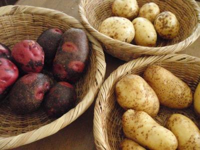 ジャガイモの収穫祭