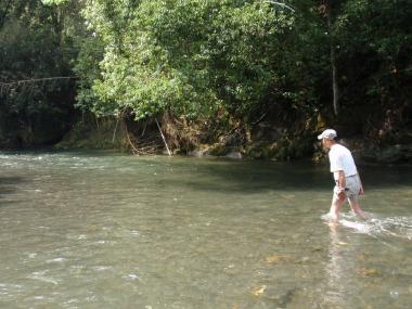 川の生き物を調べたり