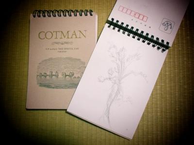 コットマン