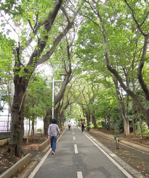 緑のサイクリングコース