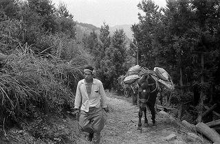 馬で荷物を運ぶ