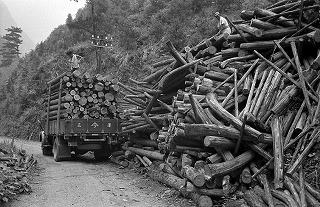 木材を運搬するトラック