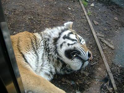 旭山動物園(1)