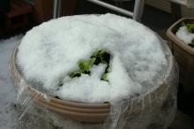 積雪菜園2