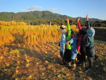 ノラノコ稲刈り2015