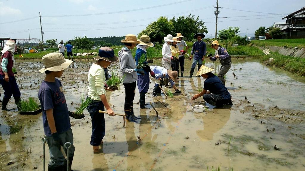 ノラノコ田植え2018