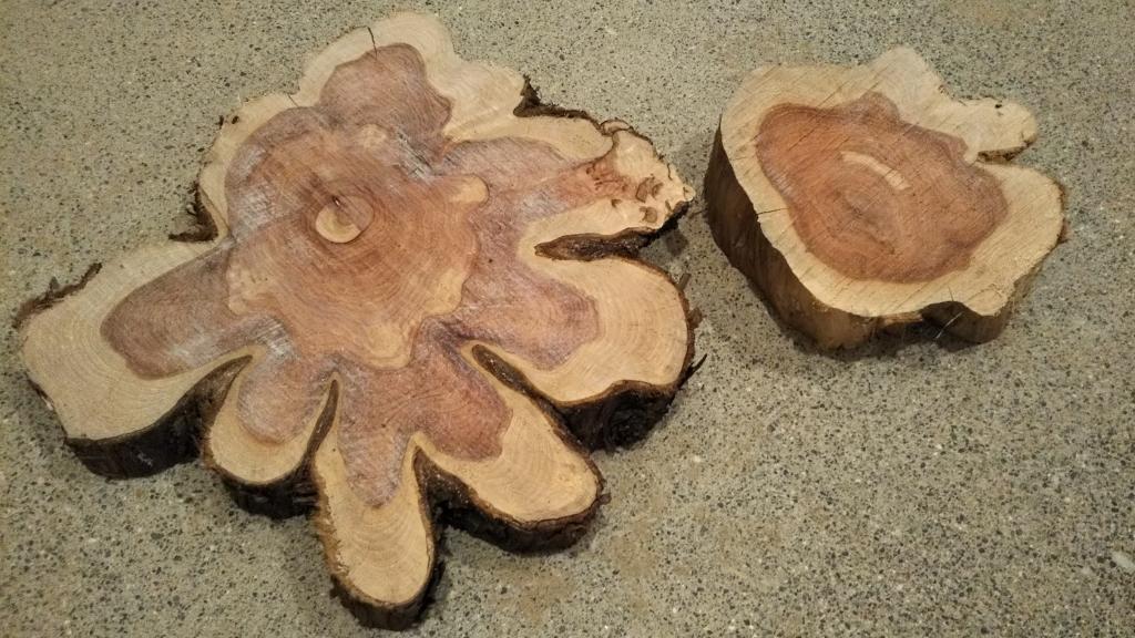 ムカデ退治の木