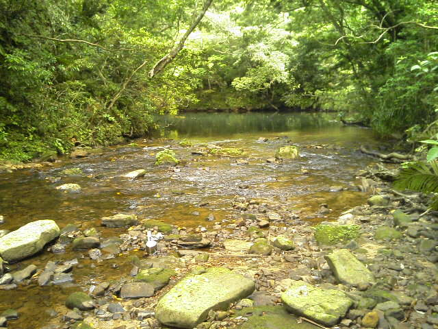 第一山小屋跡付近の川(上流方面)