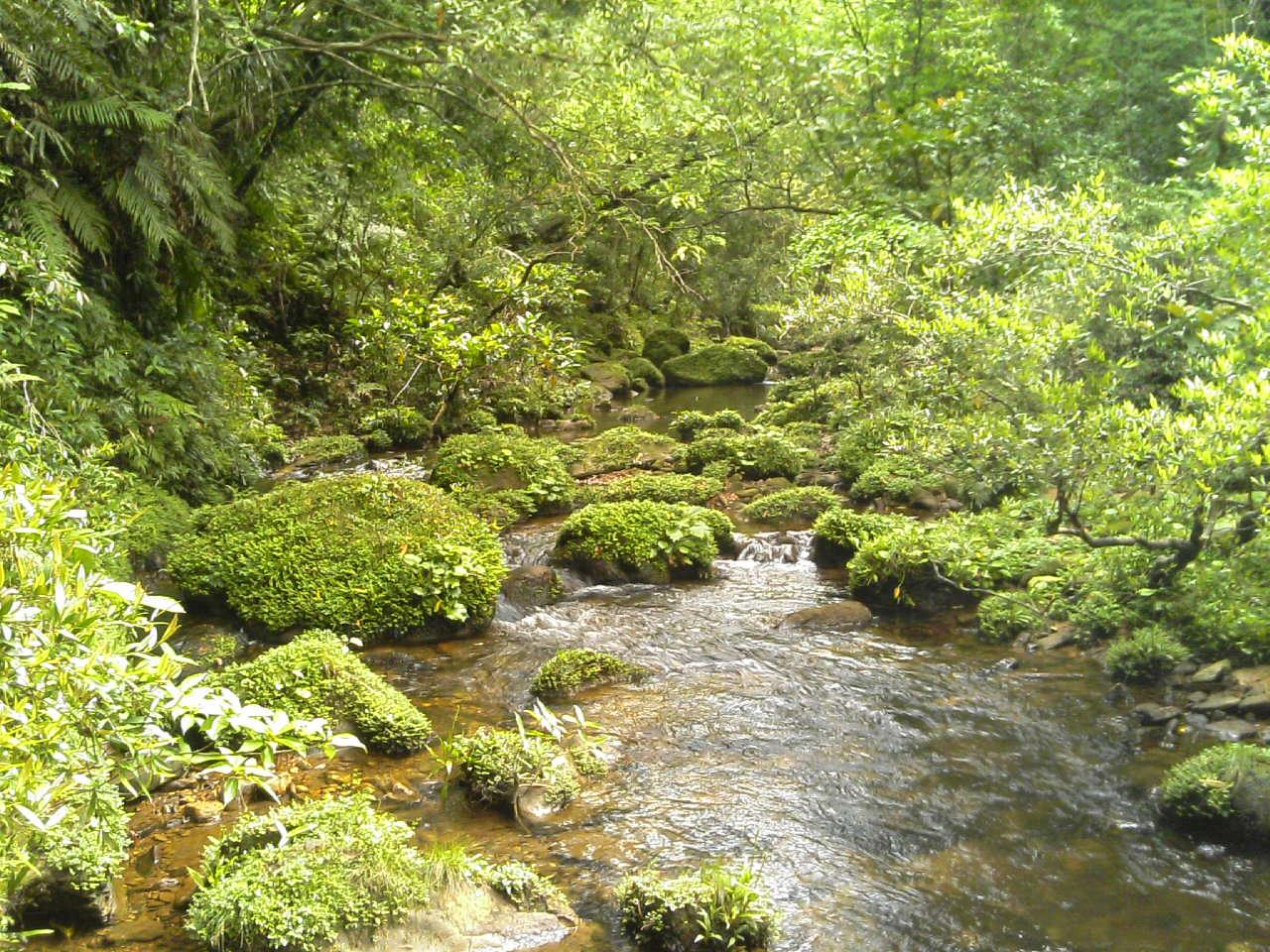 第一山小屋跡付近の川(下流方面)
