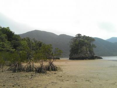 崎山湾小島