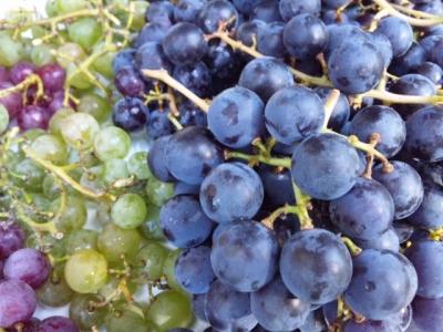 無農薬のブドウ