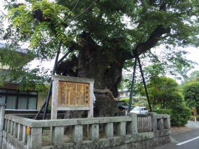 中山神社名木百選