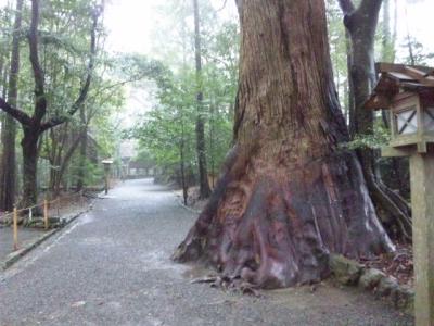 内宮参道の大木