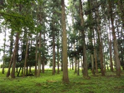 出石神社鎮守の森