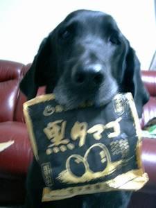 [写真]「黒たまご」の袋をくわえたニッキー。