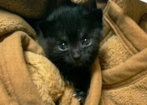[写真]今日の子猫、毛布にくるまってこっちを見ている。