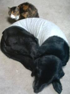 [写真]丸くなって寝ているニッキーの背中に寄り添って、ちょびも丸くなっている。