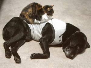 [写真]寝ているニッキーの上に、ちょびが乗っかっている!