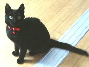 [写真]とってもかわいい黒子猫。