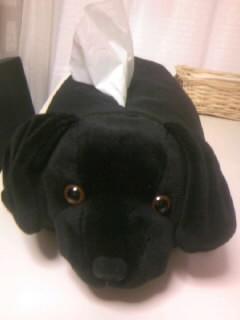 [写真]ちょっとリアルな、黒ラブティッシュケース。ぬいぐるみの背中からティッシュが出ている。