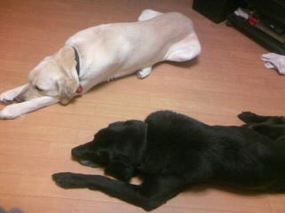 [写真]床に寝ているニッキーと、隣で両足をあぐらのように開き、両手を真っ直ぐ前に伸ばしているアルファ。