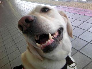 [写真]暑くて口を開けながら、嬉しそうな顔のアルファ。