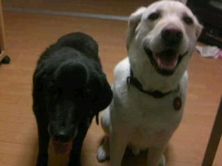 [写真]ニッキーとアルファ、並んで満足そうな表情。
