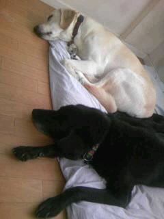 [写真]並んで寝ているニコアル1