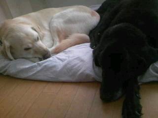 [写真]並んで寝ているニコアル2