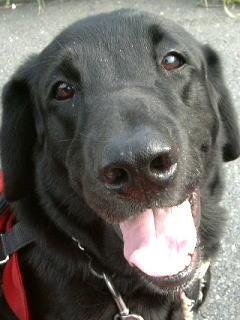 2002年9月、6歳のニッキーの笑顔。