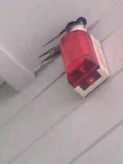 [写真]赤い警告灯を見上げると、ツバメの尾羽と翼と頭が見える。