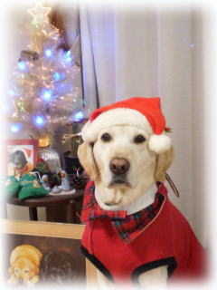 [写真]クリスマスツリーの前で、サンタの衣装を着て座ったアル。ツリーの前に、同じ衣装を着たニッキーの写真。