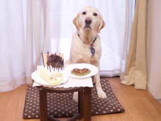 [写真]ケーキとハート型ハンバーグとニッキーの写真を前に、緊張した表情のアルファ。