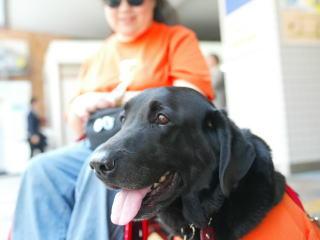 [写真]2003年、ハーネスを着けて私の車椅子に寄り添うニッキー。花井さん撮影。