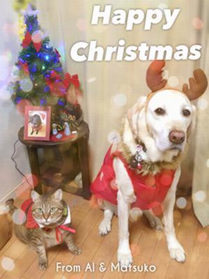 〔写真〕トナカイの角を着けた犬のアルファ、サンタの衣装を着た猫のマツコが、ツリーの前で並んでいる。