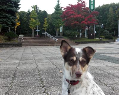 厚別公園.jpg