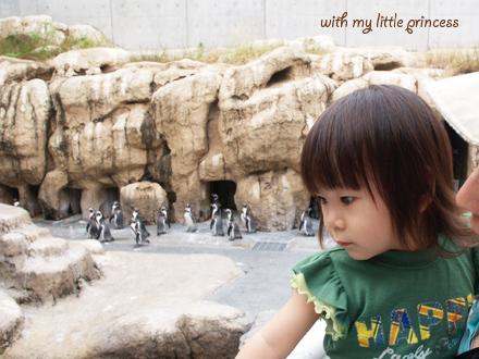 ペンギンがたくさん。