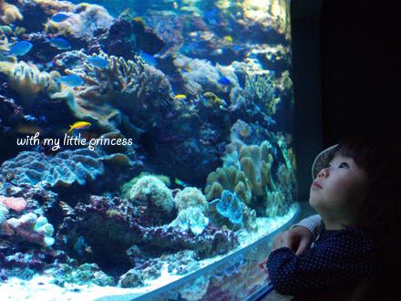 水族館で。