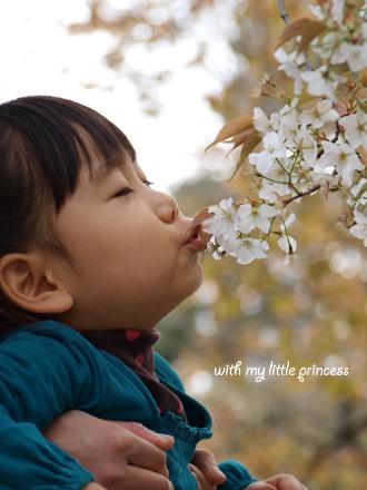 桜にチュ☆