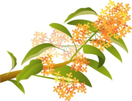 秋の花と果実 An S Cafe