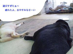 眠いよぉ〜