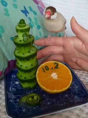 ブンちゃん8歳お誕生日キュウリケーキ