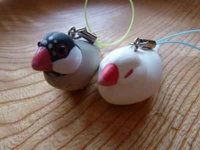 白文鳥と桜文鳥をゲット